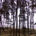 Negaon Beach, Alibaug